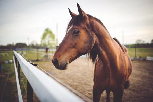 caballo enfermo